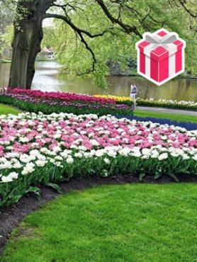 """Набор """"Парк Кекенхоф"""" 50x50 (100 шт) +Тюльпаны махровые поздние «Double Arosa» (6 шт.)"""
