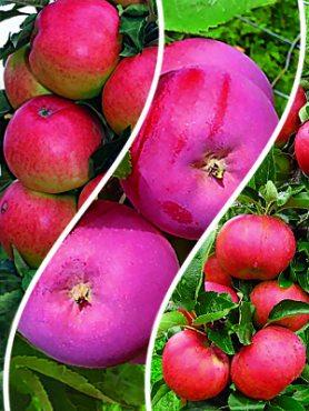 Комплект Яблучний сад (3 шт)