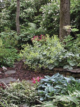 Декоративно-листяні багаторічні садові квіти, суміш (5 шт)