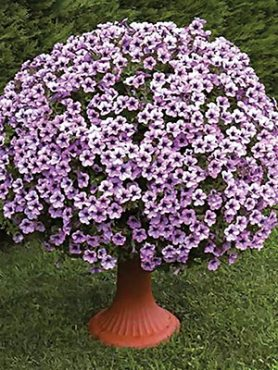 Петуния ампельная Surfinia Compact Purple Vein (1 шт)