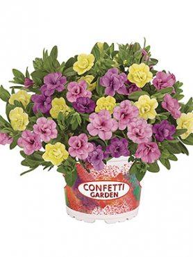 Набор  Confetti Garden MyBonnie 2021 (1 шт)
